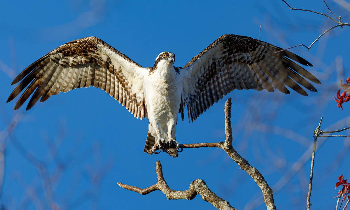 IMAGE: http://s152588970.onlinehome.us/PiCs/2019/Birding/Circle%20B%20Nov%2030/DL5A3421-Edit.jpg