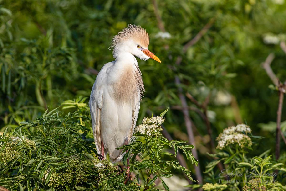 IMAGE: http://s152588970.onlinehome.us/PiCs/2019/Birding/Gatorland%20April%2020/677A0500.jpg