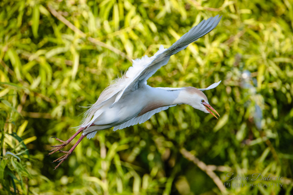 IMAGE: http://s152588970.onlinehome.us/PiCs/2019/Birding/Gatorland%20April%2020/DL5A1404.jpg