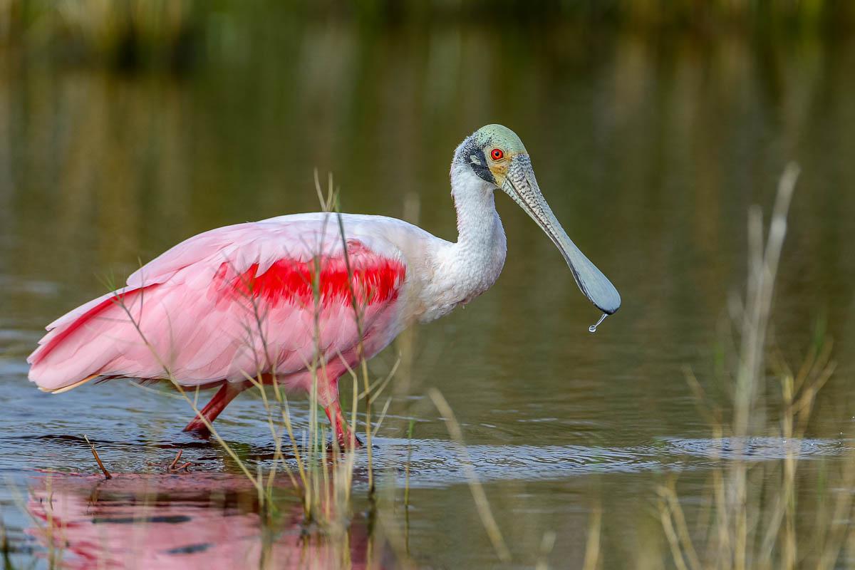 IMAGE: http://s152588970.onlinehome.us/PiCs/2020/Birding/Circle%20B%20Jan%2025/5C5A9612.jpg